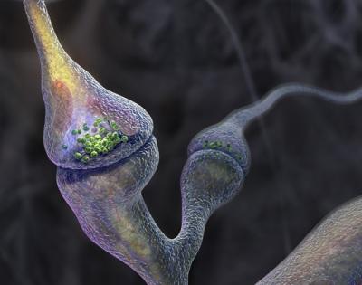 20061102211038-sinapsis3.jpg