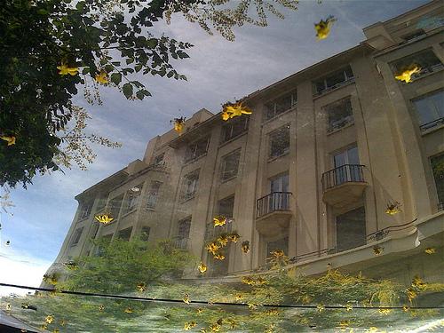Caída de flores amarillas by JoseAngelGarciaLanda