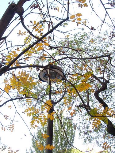 Caligrafía de las ramas by JoseAngelGarciaLanda
