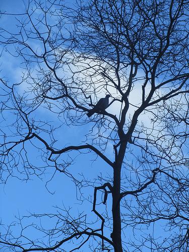 Bird on a tree by JoseAngelGarciaLanda