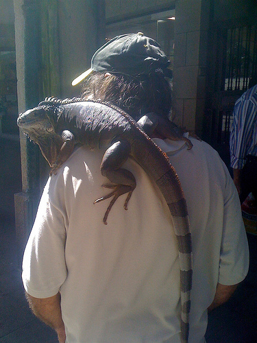 El hombre de la iguana by JoseAngelGarciaLanda