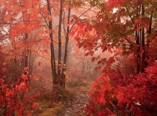 red  deeps