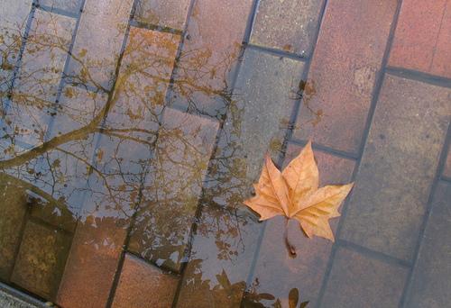 Hoja, charco, árbol, cielo, suelo by JoseAngelGarciaLanda