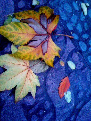 How to Do Things With Leaves by JoseAngelGarciaLanda