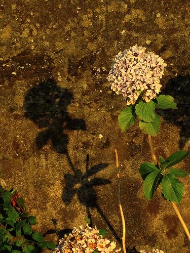 Flor y su sombra by JoseAngelGarciaLanda