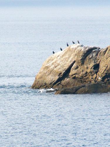 Fila de cormoranes by JoseAngelGarciaLanda
