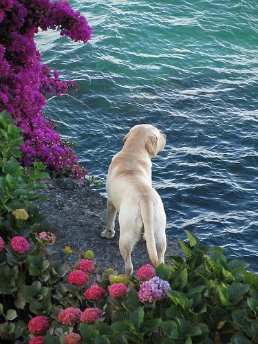 Wistful Dog 2 by JoseAngelGarciaLanda