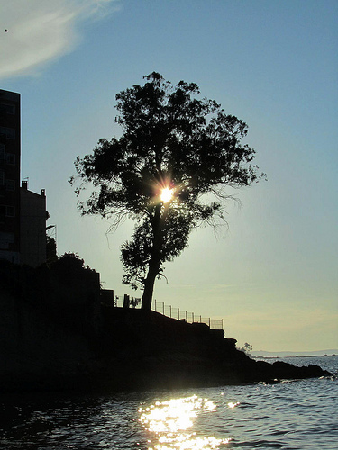 El sol en el árbol by JoseAngelGarciaLanda