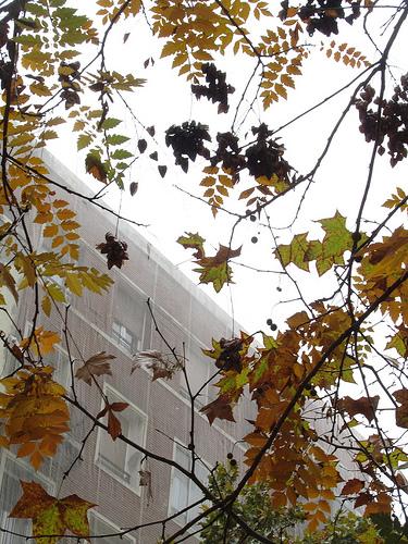Más de hojas by JoseAngelGarciaLanda