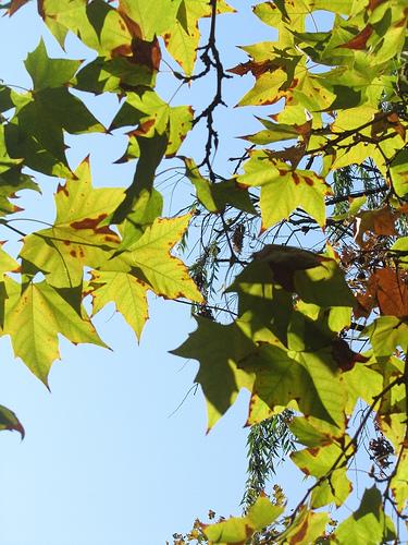 Otra foto de hojas by JoseAngelGarciaLanda