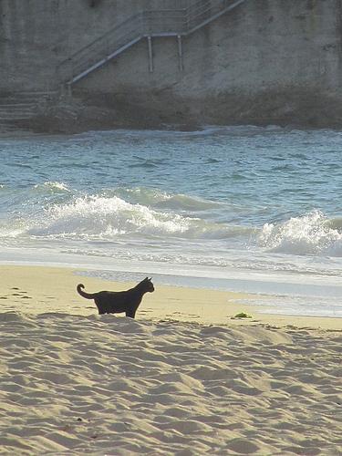 Gato negro en la playa by JoseAngelGarciaLanda