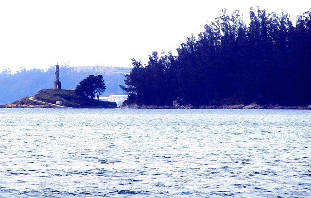 Árboles gigantes en la isla de Tambo