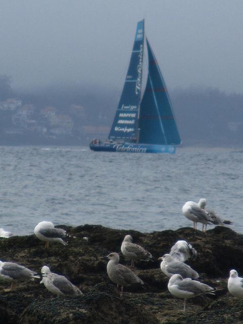 Pasa un velero y gaviotas