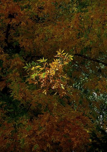 Una rama iluminada by JoseAngelGarciaLanda