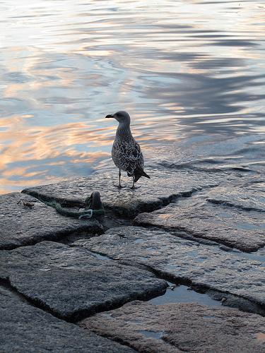 A seagull I saw by JoseAngelGarciaLanda