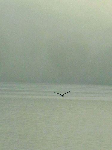 Bird of Creation by JoseAngelGarciaLanda