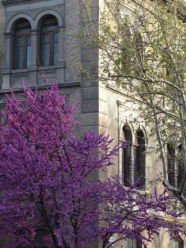 Vista de la primavera en mi barrio by JoseAngelGarciaLanda