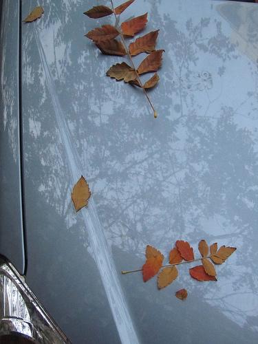 Hojas en coche 2 by JoseAngelGarciaLanda