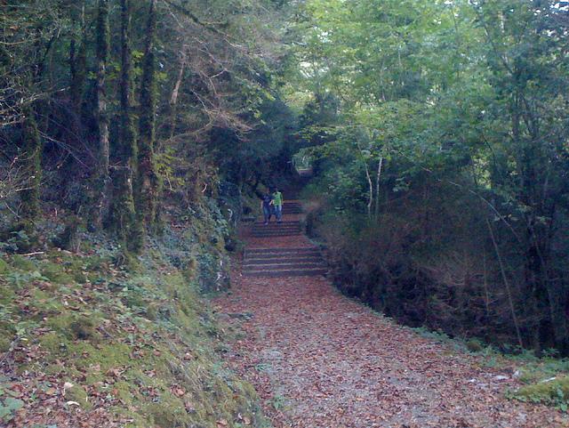 Dos niños por el camino del bosque