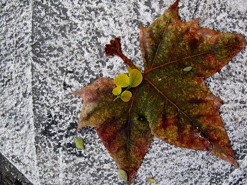 Leaf for a Print by JoseAngelGarciaLanda